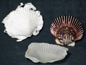 Shell Mold example